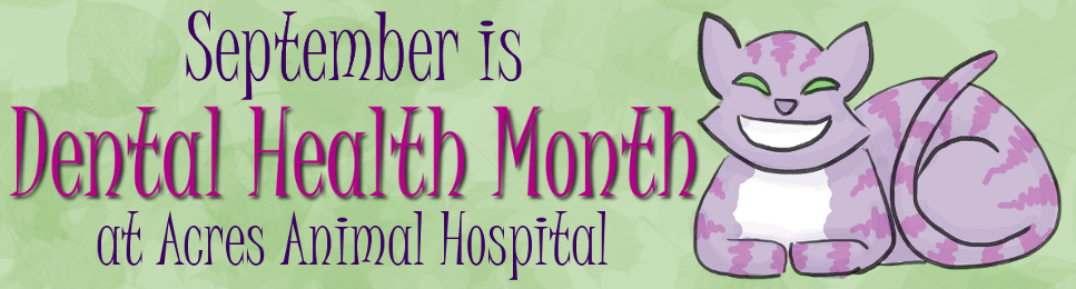 September is Dental Health Month
